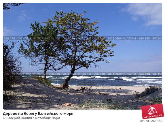 Дерево на берегу Балтийского моря, фото № 266140, снято 23 июля 2007 г. (c) Валерий Шанин / Фотобанк Лори