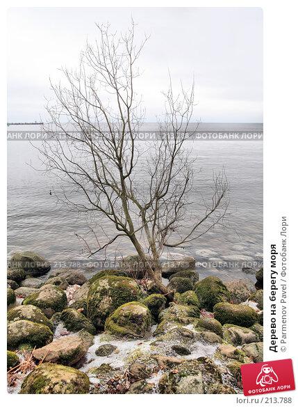 Дерево на берегу моря, фото № 213788, снято 13 февраля 2008 г. (c) Parmenov Pavel / Фотобанк Лори