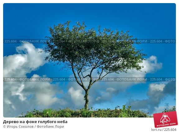 Дерево на фоне голубого неба, фото № 225604, снято 16 сентября 2007 г. (c) Игорь Соколов / Фотобанк Лори