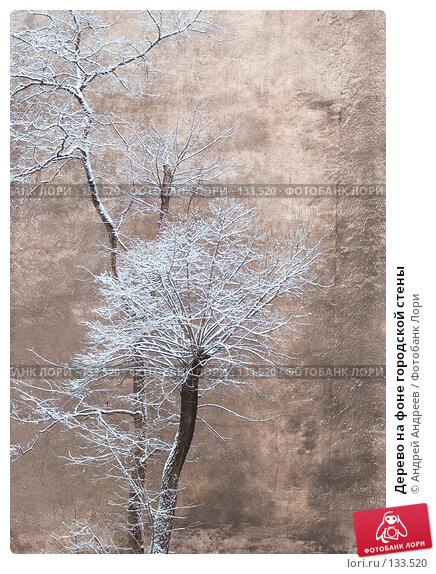 Дерево на фоне городской стены, фото № 133520, снято 6 марта 2007 г. (c) Андрей Андреев / Фотобанк Лори