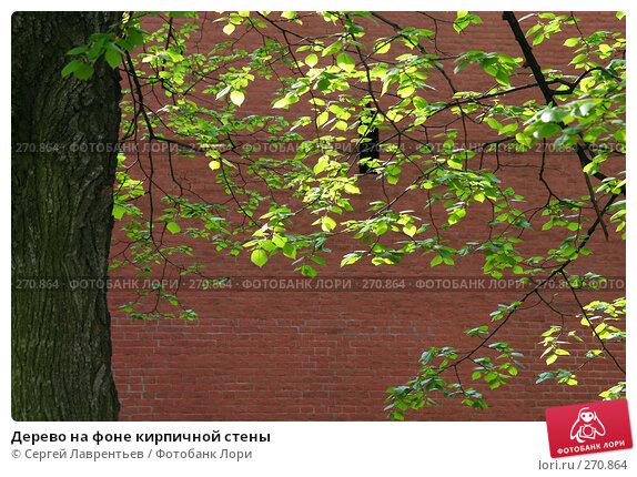 Дерево на фоне кирпичной стены, фото № 270864, снято 2 мая 2008 г. (c) Сергей Лаврентьев / Фотобанк Лори