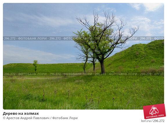 Купить «Дерево на холмах», фото № 296272, снято 20 апреля 2008 г. (c) Арестов Андрей Павлович / Фотобанк Лори