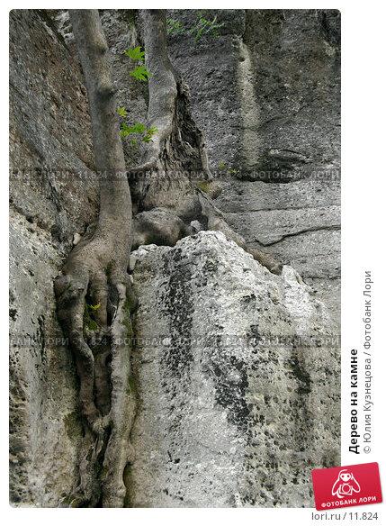 Дерево на камне, фото № 11824, снято 28 июня 2017 г. (c) Юлия Кузнецова / Фотобанк Лори