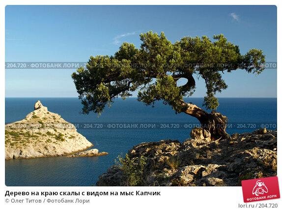 Дерево на краю скалы с видом на мыс Капчик, фото № 204720, снято 9 сентября 2006 г. (c) Олег Титов / Фотобанк Лори