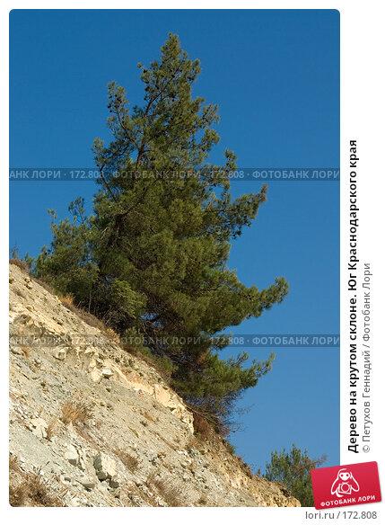 Дерево на крутом склоне. Юг Краснодарского края, фото № 172808, снято 7 августа 2007 г. (c) Петухов Геннадий / Фотобанк Лори