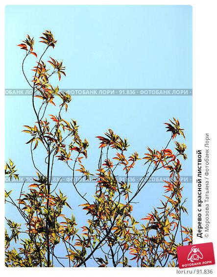 Дерево с красной листвой, фото № 91836, снято 14 августа 2007 г. (c) Морозова Татьяна / Фотобанк Лори