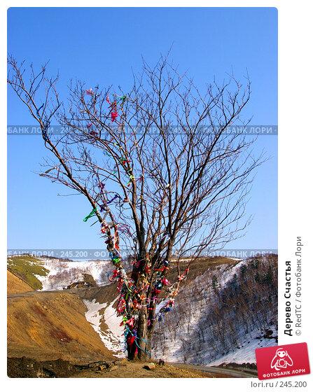 Дерево Счастья, фото № 245200, снято 7 апреля 2008 г. (c) RedTC / Фотобанк Лори