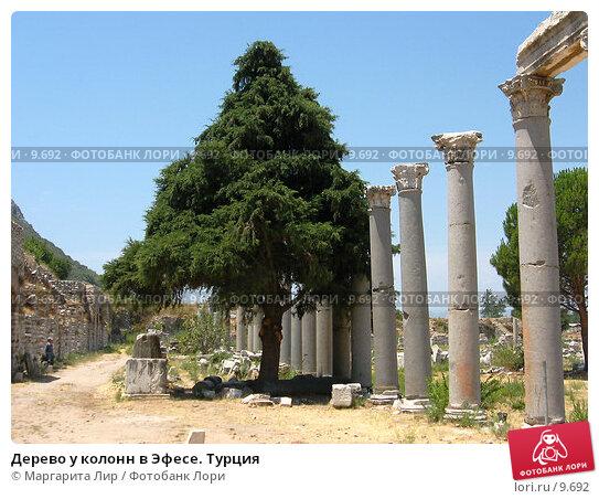 Дерево у колонн в Эфесе. Турция, фото № 9692, снято 9 июля 2006 г. (c) Маргарита Лир / Фотобанк Лори