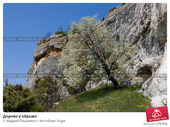 Дерево у обрыва, фото № 278936, снято 28 апреля 2007 г. (c) Андрей Пашкевич / Фотобанк Лори