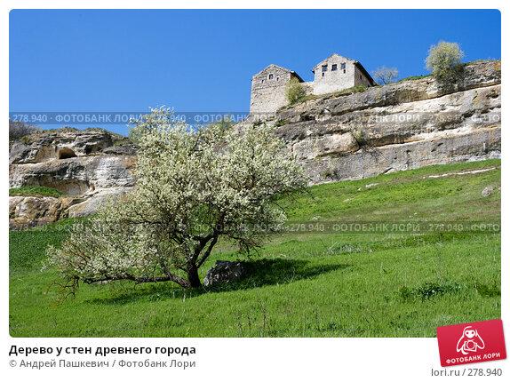 Дерево у стен древнего города, фото № 278940, снято 28 апреля 2007 г. (c) Андрей Пашкевич / Фотобанк Лори