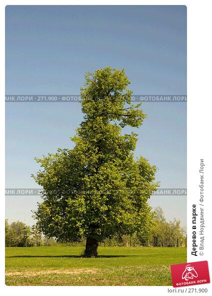 Дерево в парке, фото № 271900, снято 19 августа 2017 г. (c) Влад Нордвинг / Фотобанк Лори