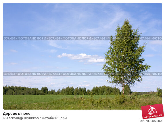 Дерево в поле, фото № 307464, снято 2 июня 2008 г. (c) Александр Шуников / Фотобанк Лори