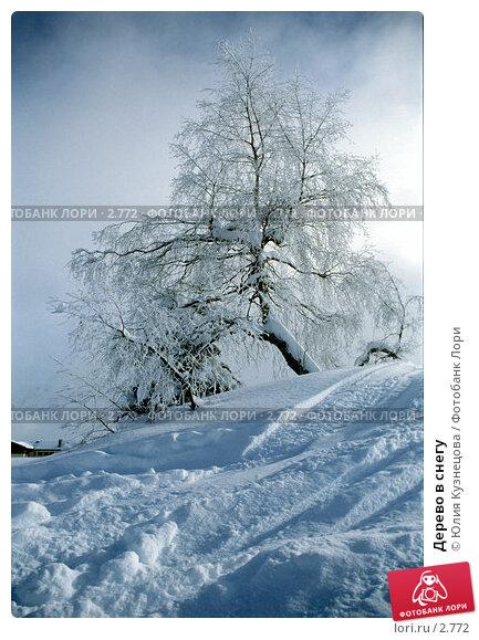 Дерево в снегу, фото № 2772, снято 22 июля 2017 г. (c) Юлия Кузнецова / Фотобанк Лори