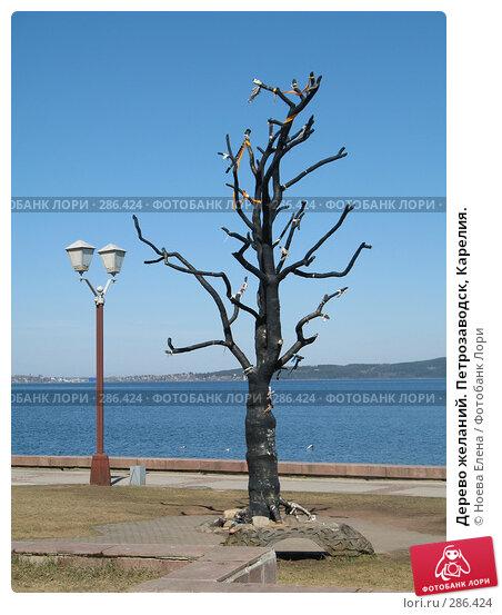 Дерево желаний. Петрозаводск, Карелия., фото № 286424, снято 3 мая 2008 г. (c) Ноева Елена / Фотобанк Лори