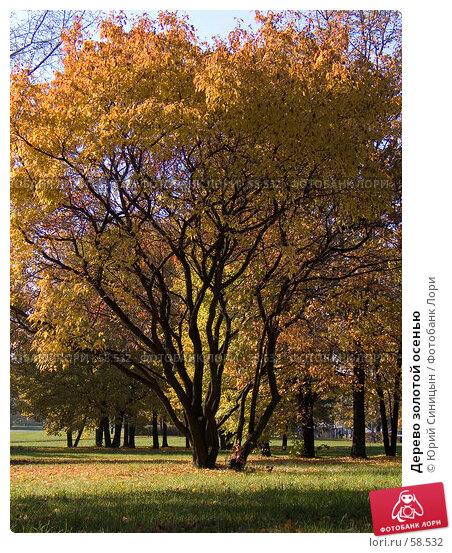 Купить «Дерево золотой осенью», фото № 58532, снято 16 октября 2004 г. (c) Юрий Синицын / Фотобанк Лори