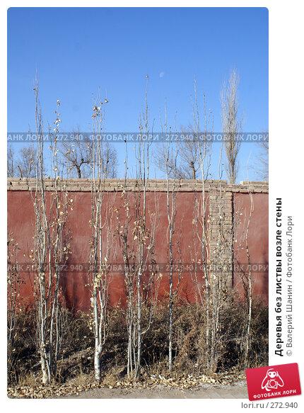 Деревья без листвы возле стены, фото № 272940, снято 29 ноября 2007 г. (c) Валерий Шанин / Фотобанк Лори
