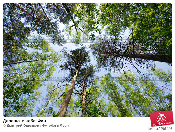 Деревья и небо. Фон, фото № 296116, снято 16 мая 2008 г. (c) Дмитрий Ощепков / Фотобанк Лори