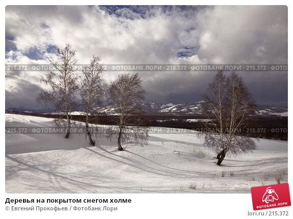 Деревья на покрытом снегом холме, фото № 215372, снято 24 февраля 2008 г. (c) Евгений Прокофьев / Фотобанк Лори