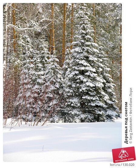 Купить «Деревья под снегом», фото № 130020, снято 23 марта 2005 г. (c) Serg Zastavkin / Фотобанк Лори