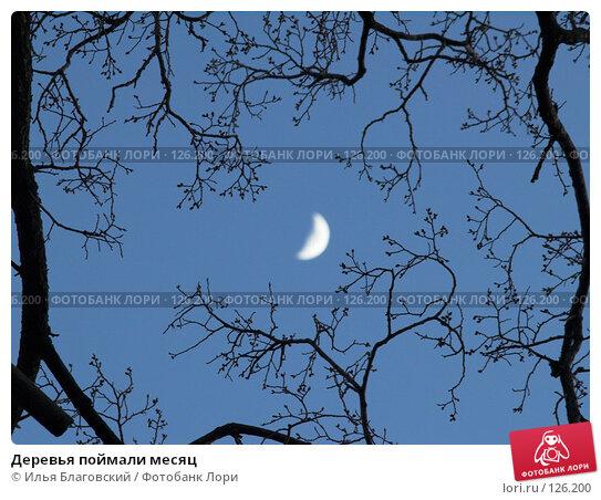 Деревья поймали месяц, фото № 126200, снято 22 января 2017 г. (c) Илья Благовский / Фотобанк Лори