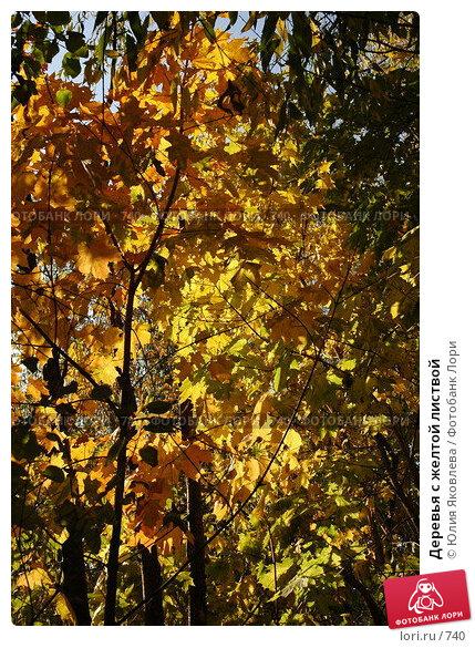Купить «Деревья с желтой листвой», фото № 740, снято 1 октября 2005 г. (c) Юлия Яковлева / Фотобанк Лори