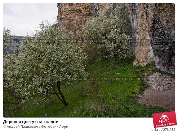 Купить «Деревья цветут на склоне», фото № 278952, снято 30 апреля 2007 г. (c) Андрей Пашкевич / Фотобанк Лори