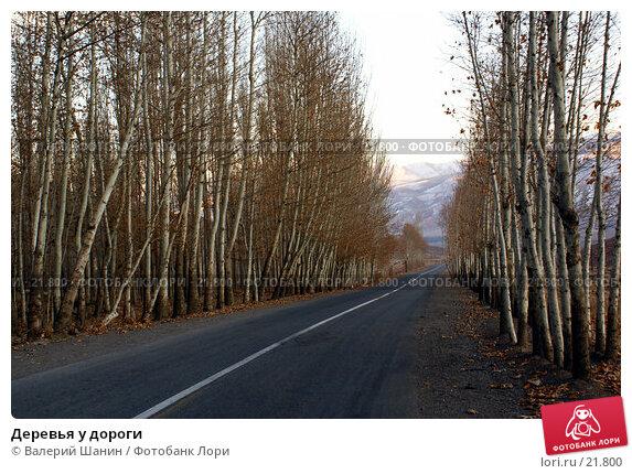 Купить «Деревья у дороги», фото № 21800, снято 23 ноября 2006 г. (c) Валерий Шанин / Фотобанк Лори