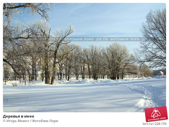 Деревья в инее, фото № 228176, снято 6 февраля 2008 г. (c) Игорь Момот / Фотобанк Лори