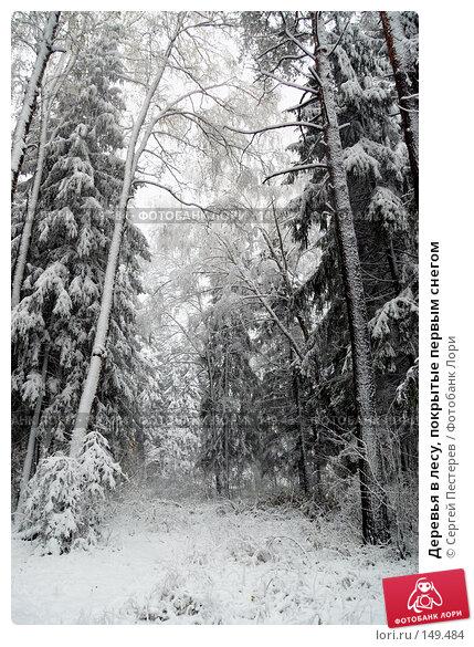 Деревья в лесу, покрытые первым снегом, фото № 149484, снято 14 октября 2007 г. (c) Сергей Пестерев / Фотобанк Лори
