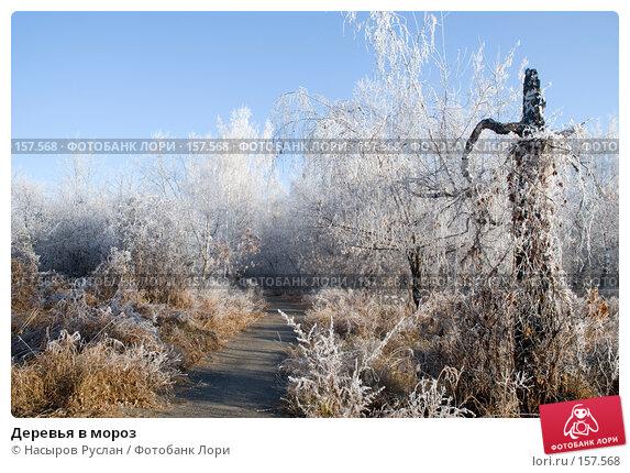 Деревья в мороз, фото № 157568, снято 2 ноября 2007 г. (c) Насыров Руслан / Фотобанк Лори