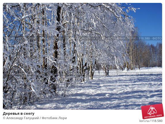 Деревья в снегу, фото № 118580, снято 1 апреля 2006 г. (c) Александр Галуцкий / Фотобанк Лори