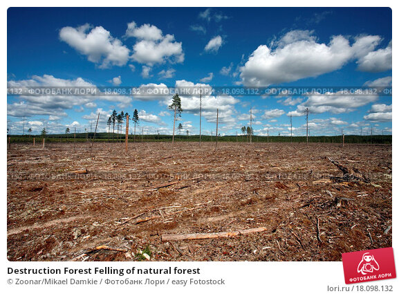 21st century problems deforestation The drivers of tropical deforestation have shifted in the early 21st century to hinge on growth of cities and the globalised agricultural trade, a new large-scale study concludes.