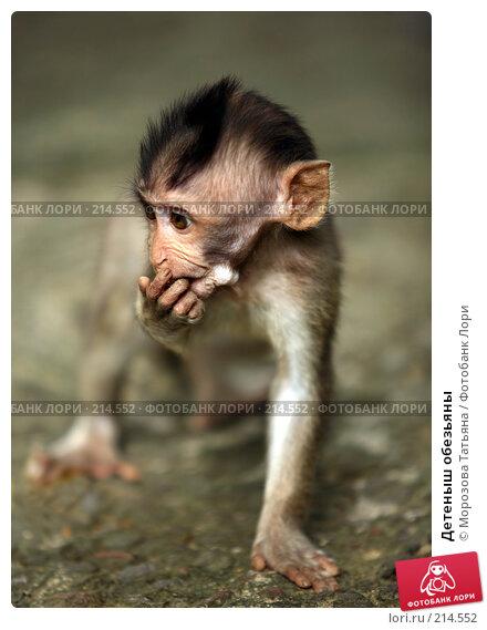 Детеныш обезьяны, фото № 214552, снято 24 февраля 2008 г. (c) Морозова Татьяна / Фотобанк Лори