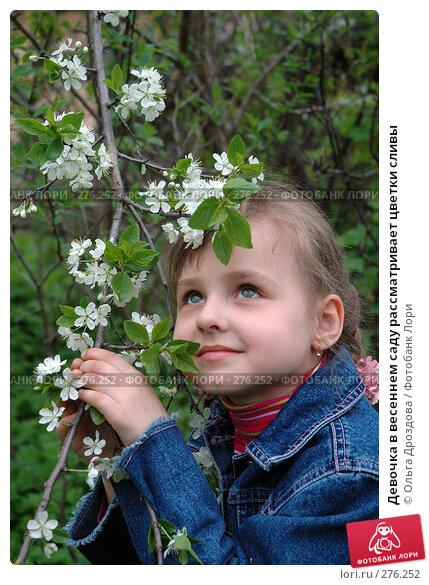 Девочка в весеннем саду рассматривает цветки сливы, фото № 276252, снято 18 мая 2005 г. (c) Ольга Дроздова / Фотобанк Лори