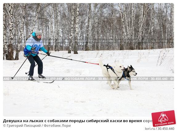 Девушка на лыжах с собаками породы сибирский хаски во время соревнований на празднике Хаскифест-2019 в Новосибирске. Редакционное фото, фотограф Григорий Писоцкий / Фотобанк Лори