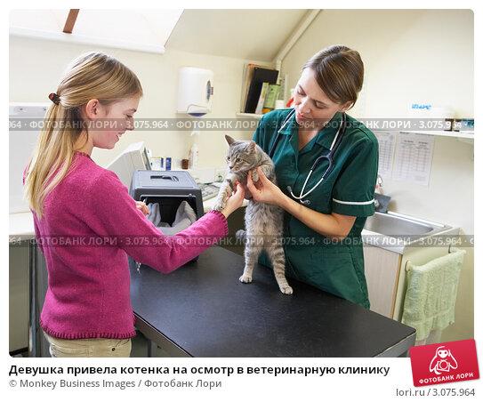 Купить «Девушка привела котенка на осмотр в ветеринарную клинику», фото № 3075964, снято 17 ноября 2005 г. (c) Monkey Business Images / Фотобанк Лори