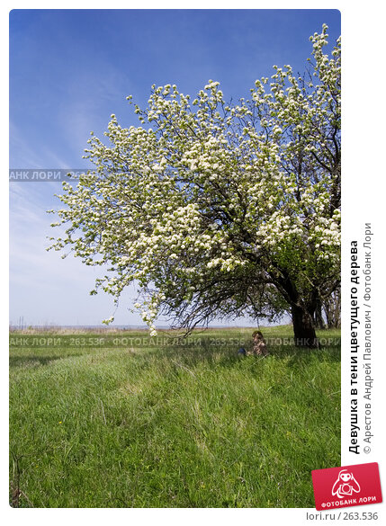 Девушка в тени цветущего дерева, фото № 263536, снято 20 апреля 2008 г. (c) Арестов Андрей Павлович / Фотобанк Лори