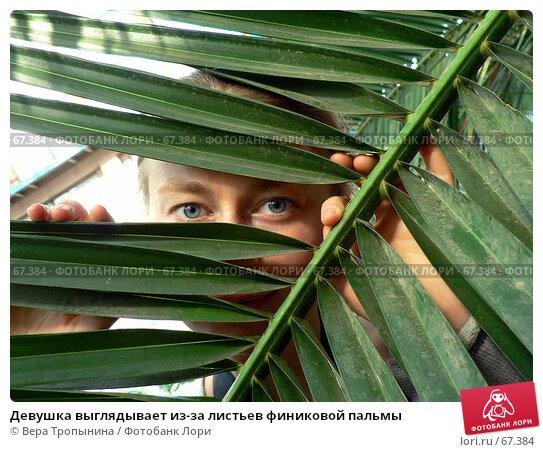 Девушка выглядывает из-за листьев финиковой пальмы, фото № 67384, снято 4 апреля 2007 г. (c) Вера Тропынина / Фотобанк Лори