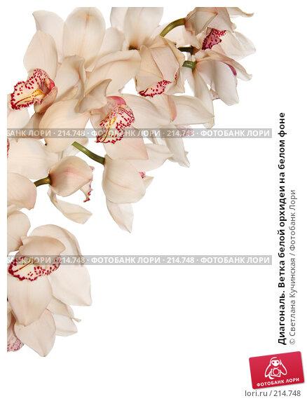 Купить «Диагональ. Ветка белой орхидеи на белом фоне», фото № 214748, снято 25 апреля 2018 г. (c) Светлана Кучинская / Фотобанк Лори