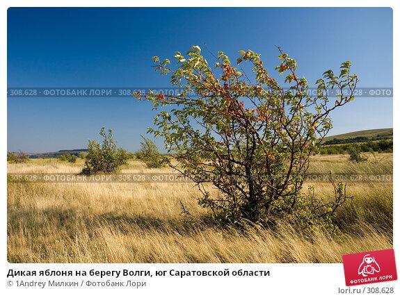Дикая яблоня на берегу Волги, юг Саратовской области, фото № 308628, снято 19 июля 2007 г. (c) 1Andrey Милкин / Фотобанк Лори