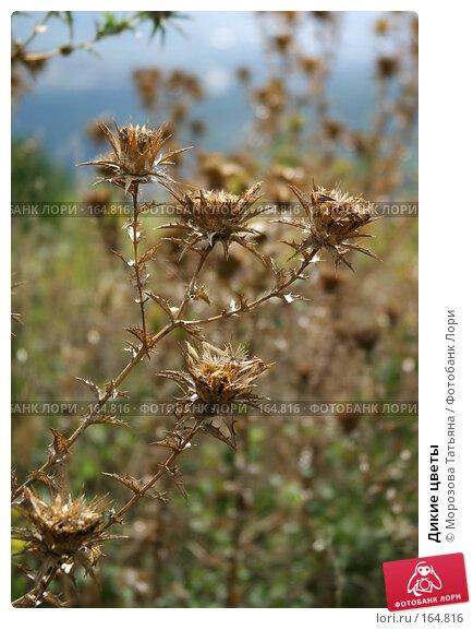 Дикие цветы, фото № 164816, снято 9 августа 2004 г. (c) Морозова Татьяна / Фотобанк Лори