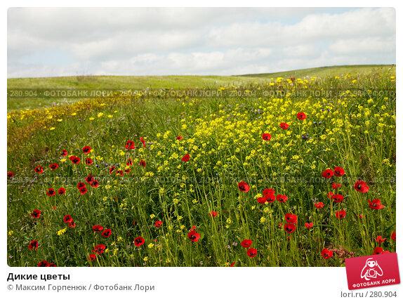 Дикие цветы, фото № 280904, снято 6 мая 2006 г. (c) Максим Горпенюк / Фотобанк Лори