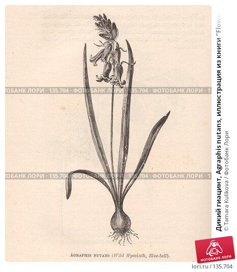 """Купить «Дикий гиацинт, Agraphis nutans, иллюстрация из книги """"Flowers of the field"""", издано в Лондоне в 1888», иллюстрация № 135704 (c) Tamara Kulikova / Фотобанк Лори"""