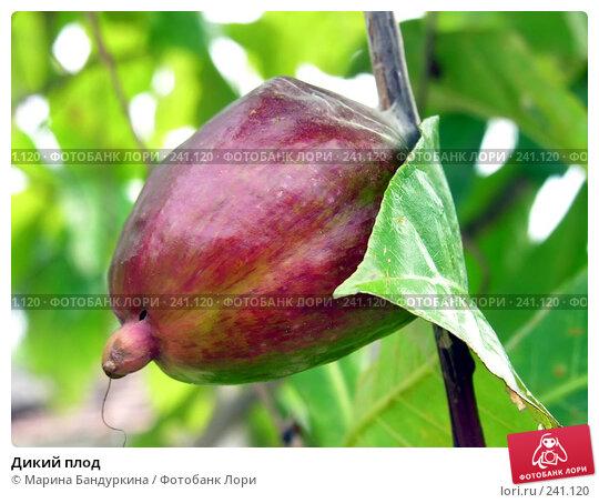 Дикий плод, фото № 241120, снято 20 ноября 2005 г. (c) Марина Бандуркина / Фотобанк Лори