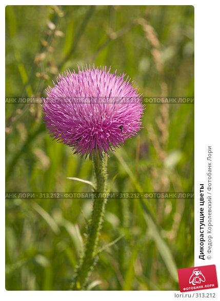 Дикорастущие цветы, фото № 313212, снято 4 июня 2008 г. (c) Федор Королевский / Фотобанк Лори