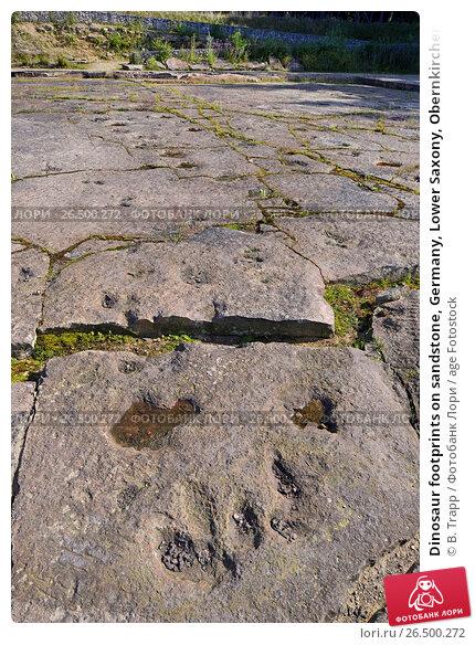 Купить «Dinosaur footprints on sandstone, Germany, Lower Saxony, Obernkirchener Sandsteinbrueche, Obernkirchen», фото № 26500272, снято 18 июля 2014 г. (c) age Fotostock / Фотобанк Лори