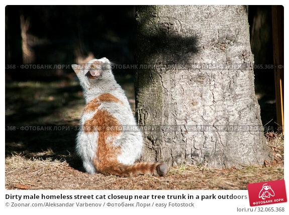 Dirty male homeless street cat closeup near tree trunk in a park outdoors in sunny winter day. Стоковое фото, фотограф Zoonar.com/Aleksandar Varbenov / easy Fotostock / Фотобанк Лори