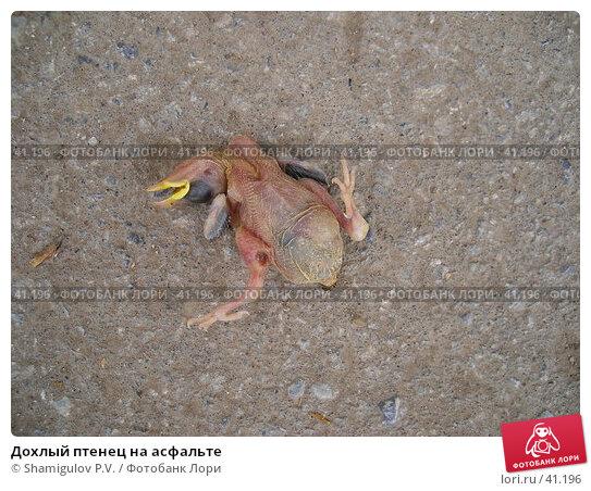 Дохлый птенец на асфальте, фото № 41196, снято 8 мая 2007 г. (c) Shamigulov P.V. / Фотобанк Лори