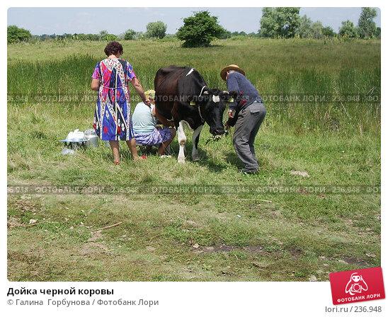 Дойка черной коровы, фото № 236948, снято 21 февраля 2017 г. (c) Галина  Горбунова / Фотобанк Лори