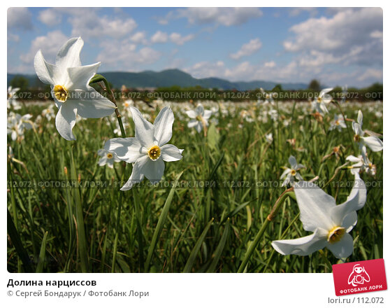 Долина нарциссов, фото № 112072, снято 13 мая 2007 г. (c) Сергей Бондарук / Фотобанк Лори